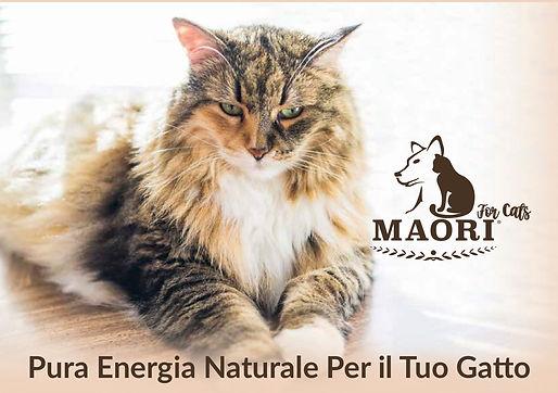 Brochure Gatto 1.jpg