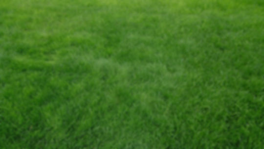 738103-widescreen-hd-grass-wallpaper-204