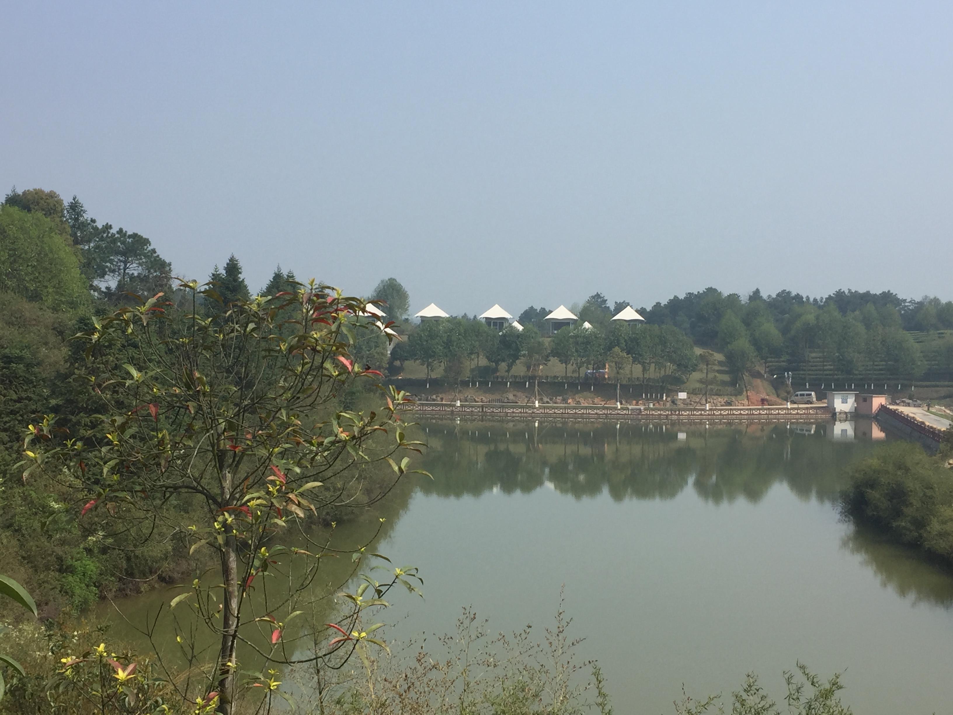 湘丰茶业绿茶种植基地帐篷酒店