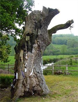 Le chêne Saint-Méen, Le Pré d'Auge