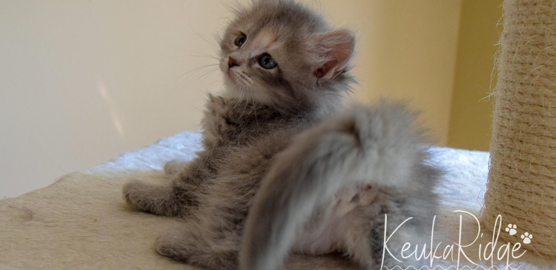 Keuka Ridge Felicity - 7 Weeks Old