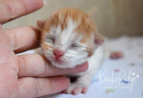 Keuka Ridge Linus - 5 days old