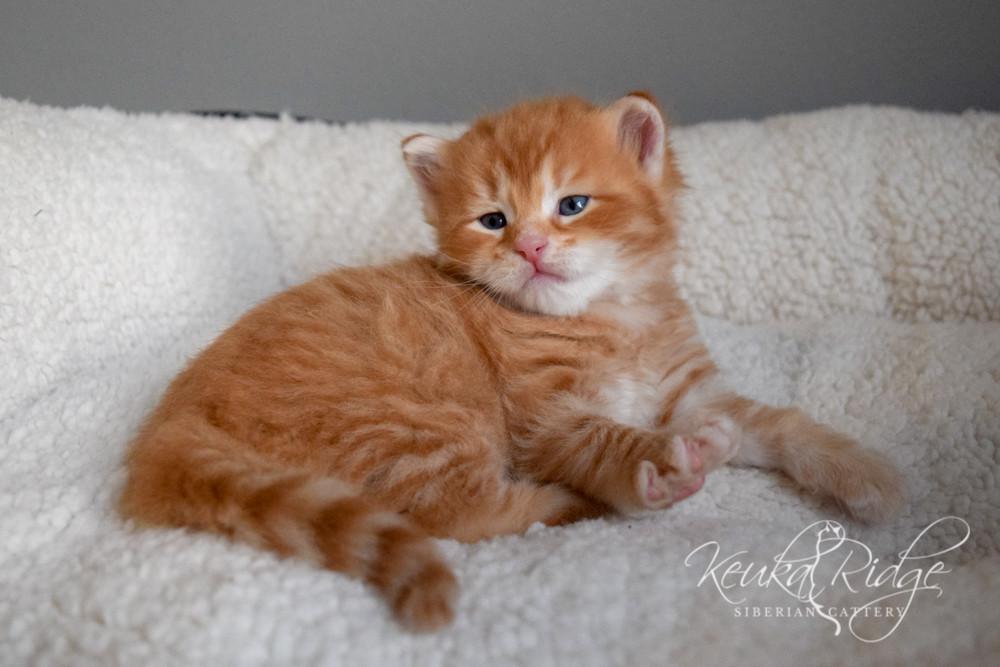 Keuka Ridge Elessar - 1 Month Old