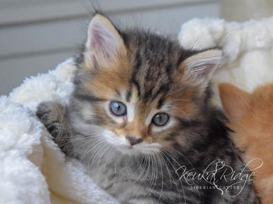 Keuka Ridge Barney Lionheart