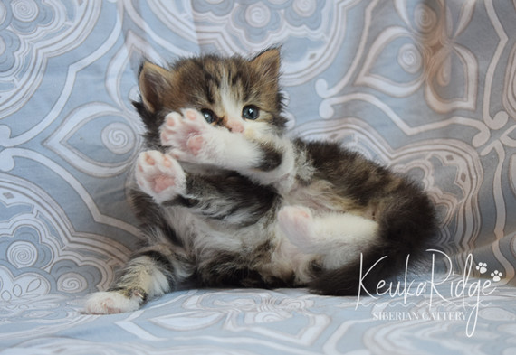 Keuka Ridge Lucas - 4 Weeks Old