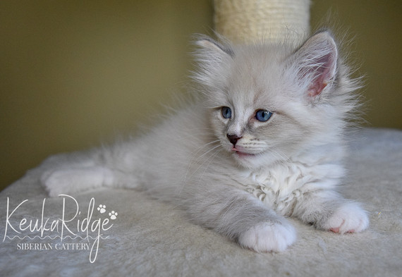Keuka Ridge Farley - 7 Weeks Old