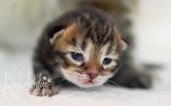 Keuka Ridge Kirby