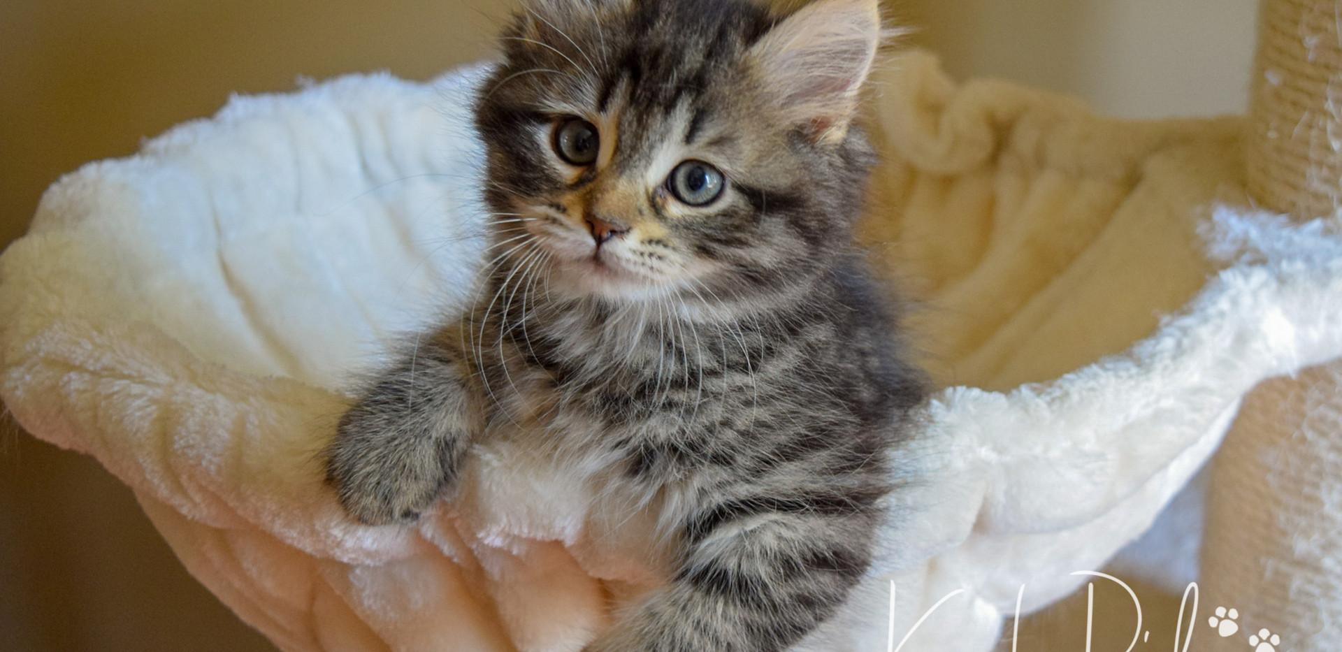 Keuka Ridge Emery - 10 Weeks Old