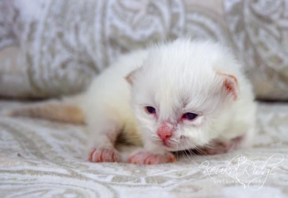 Keuka Ridge Finnigan - 2 Weeks Old