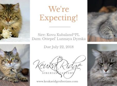 Kittens Due July 22, 2018!