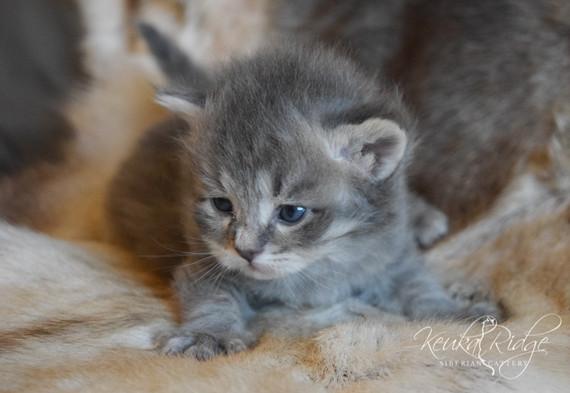 Keuka Ridge Duncan - 3 Weeks Old