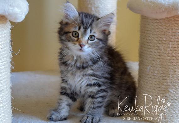 Keuka Ridge Eliana - 10 Weeks Old