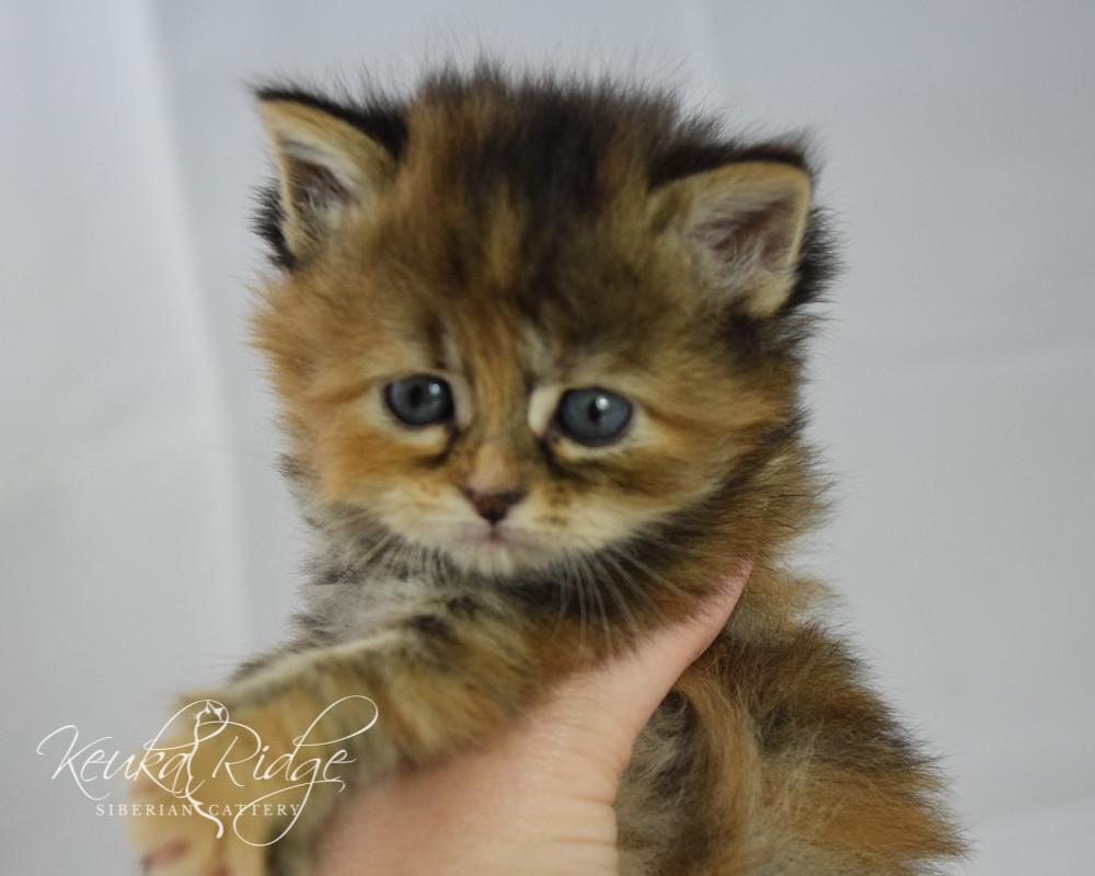 Keuka Ridge Fallon - 1 Month Old