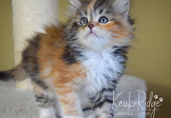 Keuka Ridge Fantasia - 7 Weeks Old