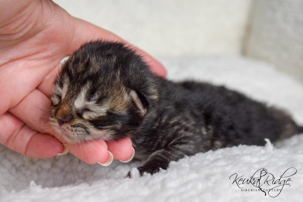 Keuka Ridge Emery - 4 Days Old