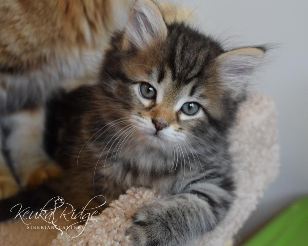 Keuka Ridge Eliana - 8 Weeks Old