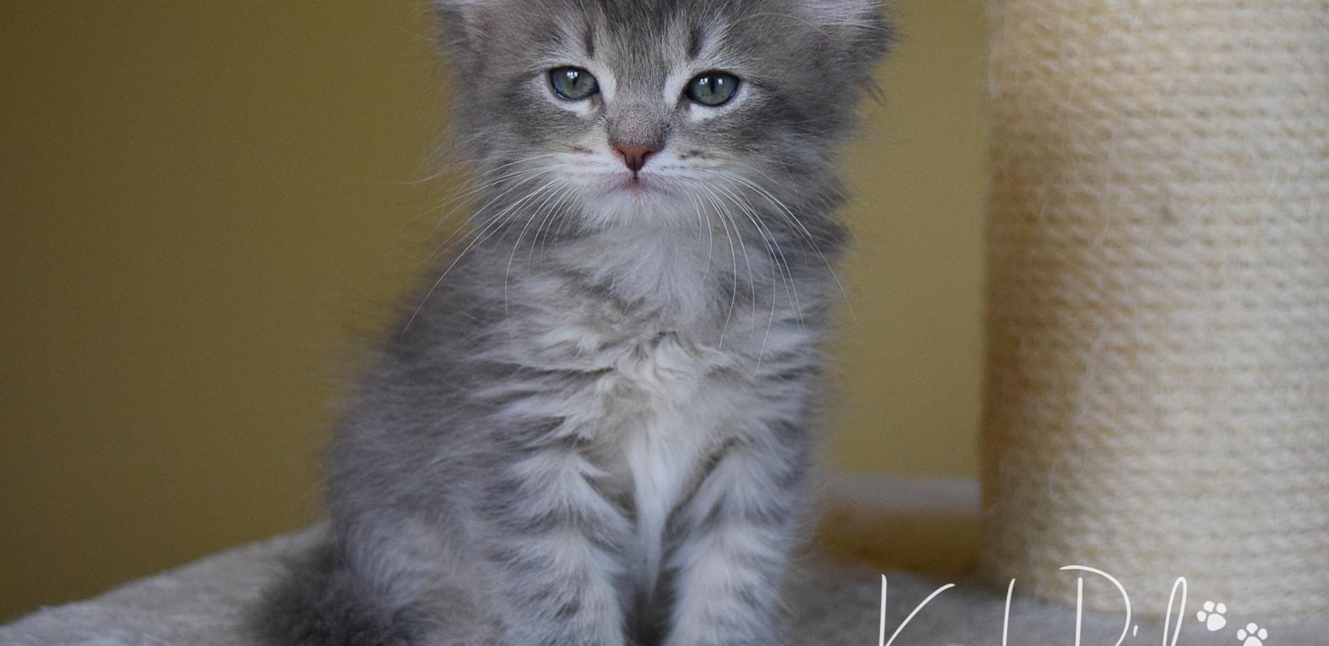 Keuka Ridge Finley - 7 Weeks Old