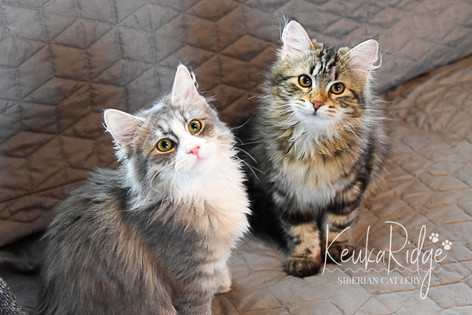Nereo Phantom Cats of Keuka Ridge