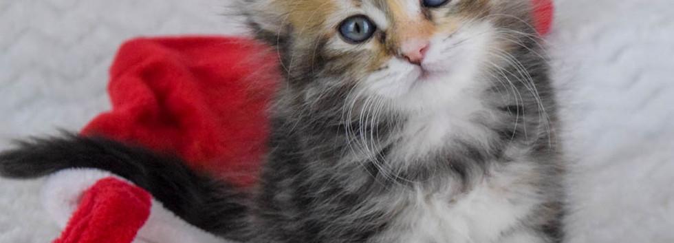 Keuka Ridge Cashmere - 6 Weeks Old