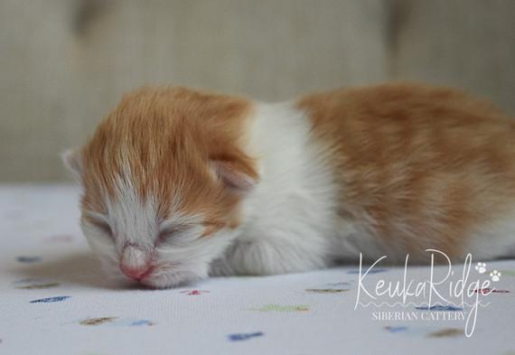 Keuka Ridge Luna - 5 days old