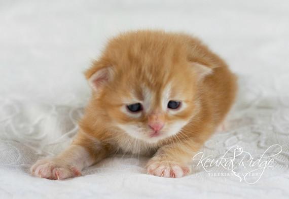 Keuka Ridge Bash Sparkheart - 16 days old
