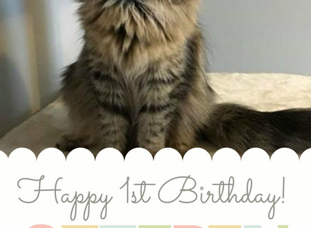 Happy Birthday My Princess!