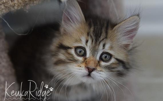Keuka Ridge Hope
