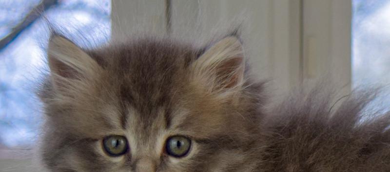 Keuka Ridge Duncan - 7 Weeks Old