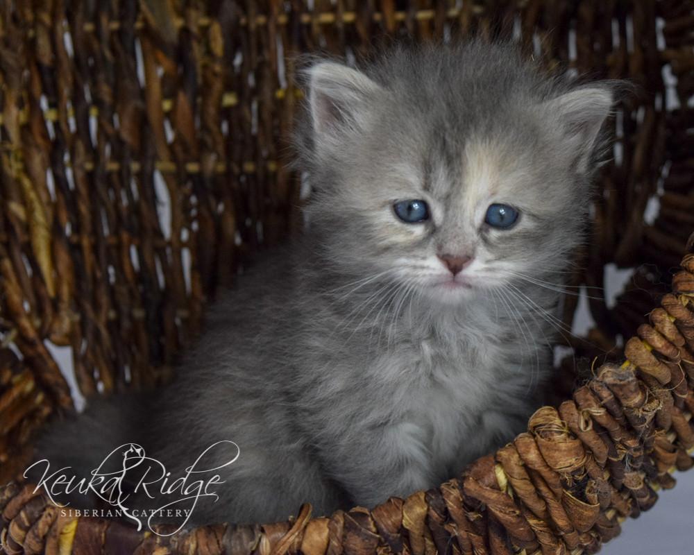 Keuka Ridge Felicity - 1 Month Old