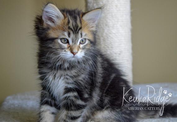 Keuka Ridge Eragon - 10 Weeks Old