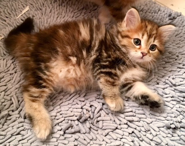 How to Kitten-Proof Your Home & Keep Your Kitten Safe