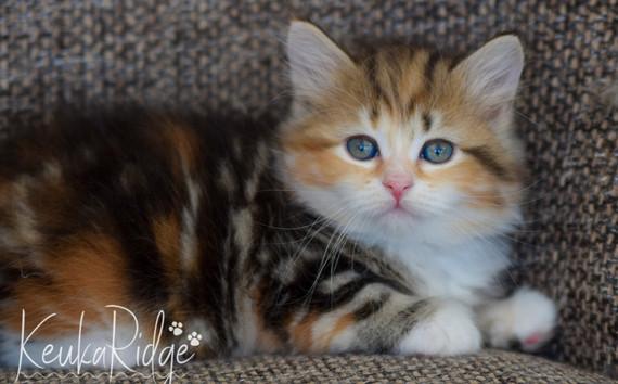 Keuka Ridge Galadriel - 7 Weeks Old