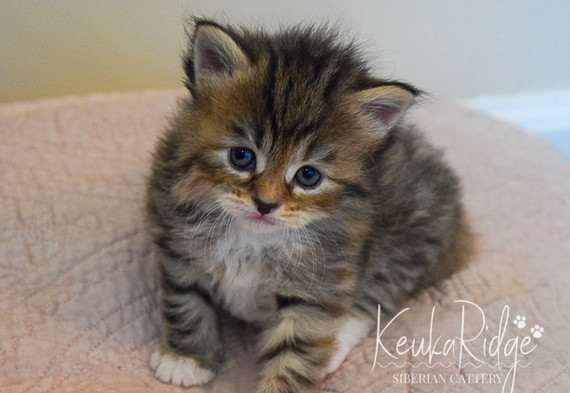Keuka Ridge Lexxis - 4 Weeks Old