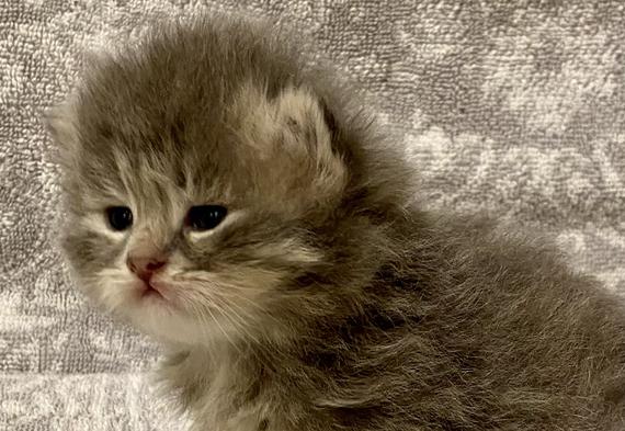 Keuka Ridge Saville - 3 weeks old