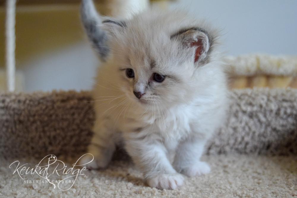 Keuka Ridge Farley - 1 Month Old