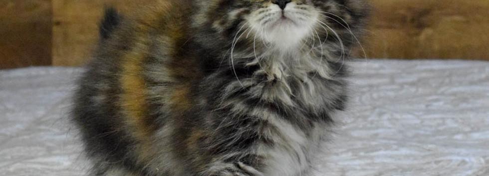 Keuka Ridge Cheyenne - 11 Weeks Old