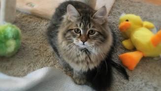 Ottepel' Lunnaya Dymka (Oakley) - 4 months old