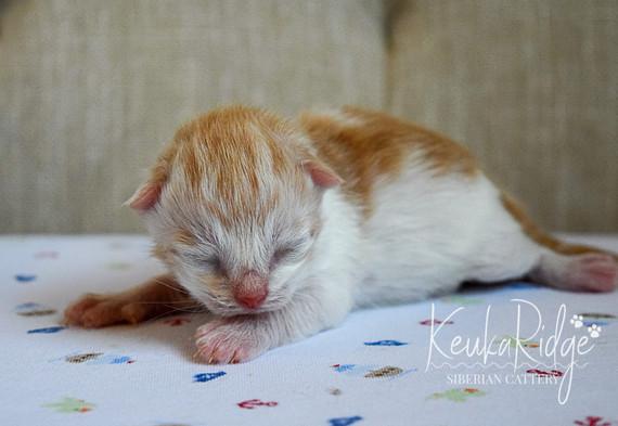 Keuka Ridge Lumiere - 5 days old