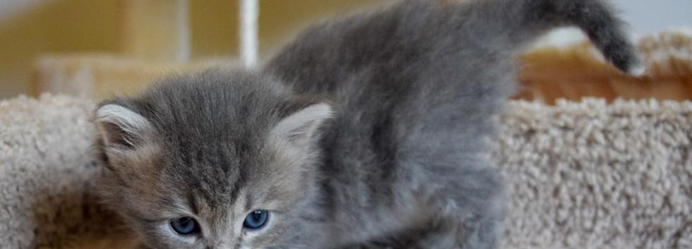 Keuka Ridge Finley - 1 Month Old