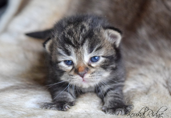 Keuka Ridge Emery - 15 Days Old