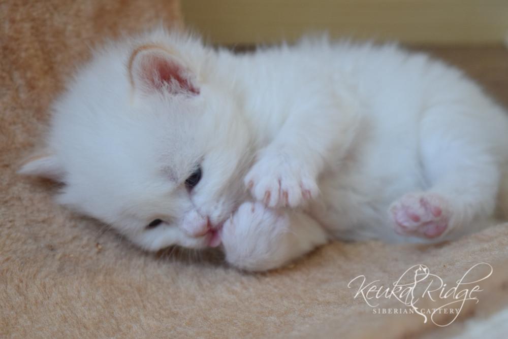 Keuka Ridge Finnigan - 3 Weeks Old