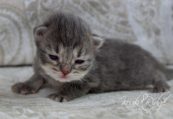 Keuka Ridge Finley - 2 Weeks Old