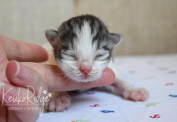 Keuka Ridge Liam - 5 days old