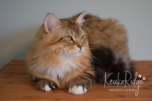 Nikolai Siberian Sapphire of Keuka Ridge