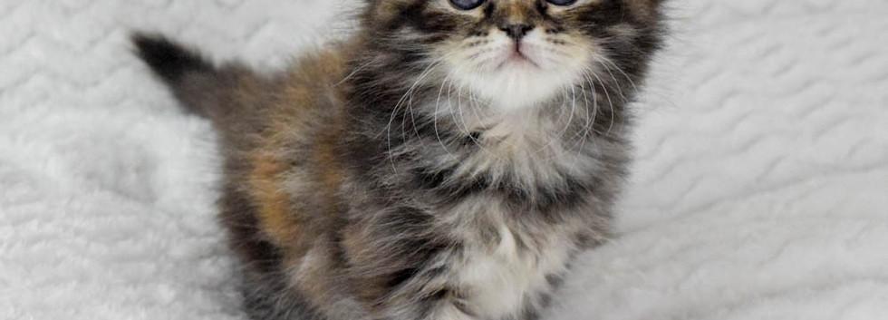 Keuka Ridge Cheyenne - 6 Weeks Old