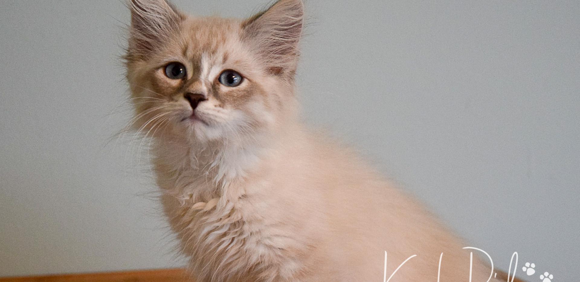 Keuka Ridge Farley - 11.5 Weeks Old