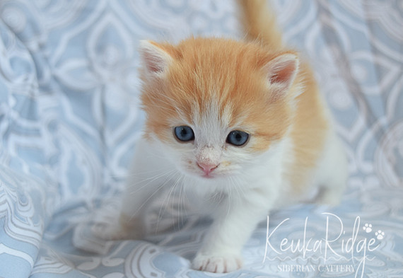 Keuka Ridge Luna - 4 Weeks Old
