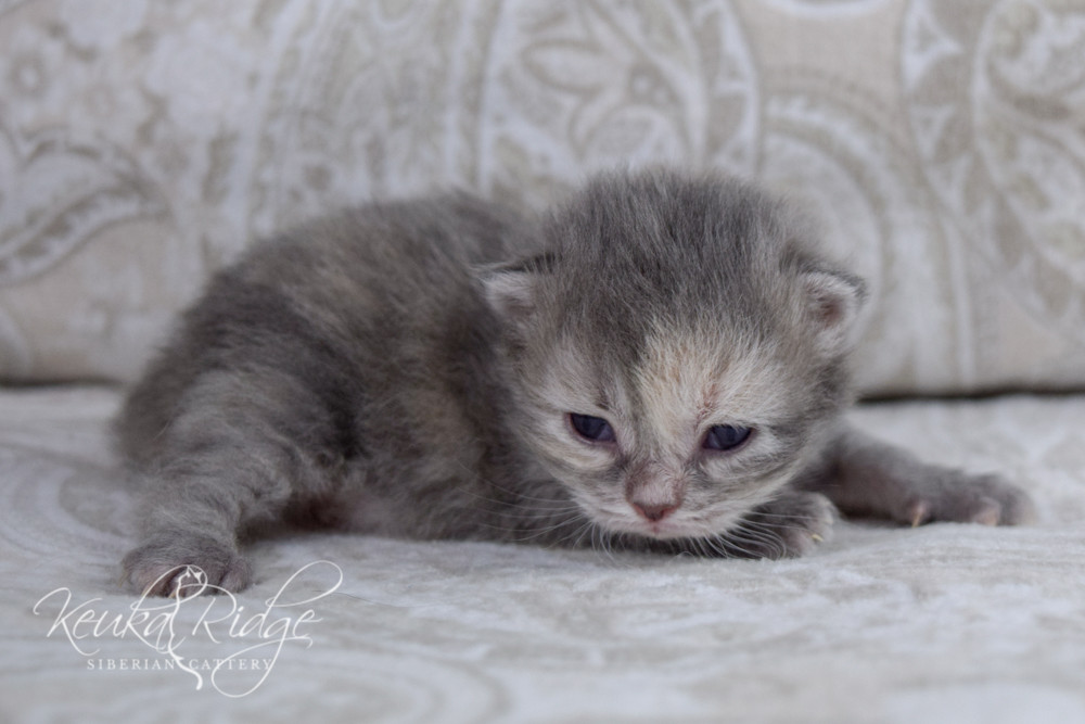 Keuka Ridge Felicity - 2 Weeks Old