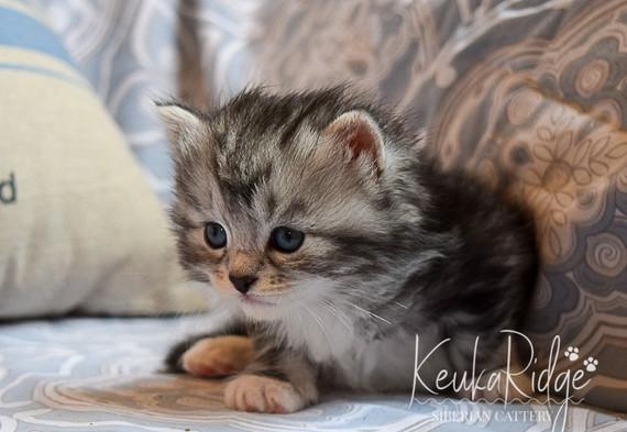 Keuka Ridge Logan - 4 Weeks Old