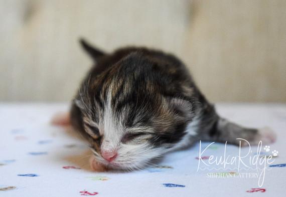 Keuka Ridge Lucas - 5 days old